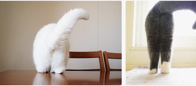 背後から見た猫の後ろ足 by 写真集「ねこのおみあし」
