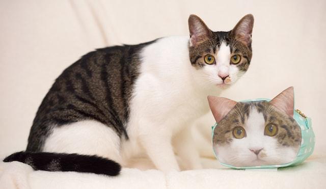 愛猫の写真とプリントファブリックを使って作った「リアル猫ポーチ」