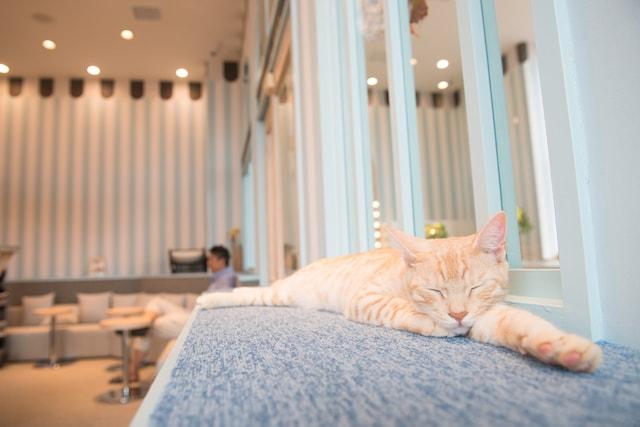 猫カフェ MoCHA(モカ)イオンレイクタウン店の猫スタッフ1