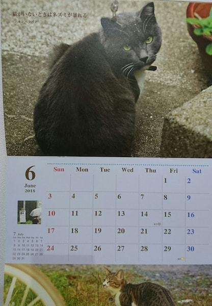 2018年のチャリティー猫カレンダーの表紙 2018年6月のページ
