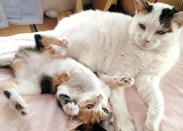 飼い猫となった猫の「ぽー」 by 書籍「やさしいねこ」