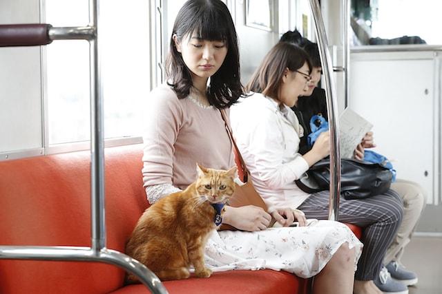 相鉄に乗車するそうにゃん演じる猫と、主人公のユメコ(女優:長谷川かすみさん)