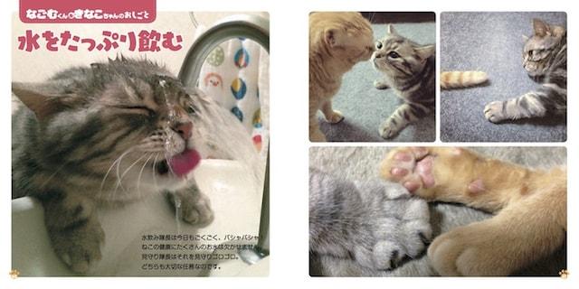 水が上手に飲めないなごむくん、同居猫のきなこちゃんの写真 by ねこのおしごと