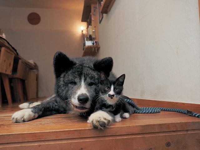 兄弟のように仲良しなハチワレ犬と猫