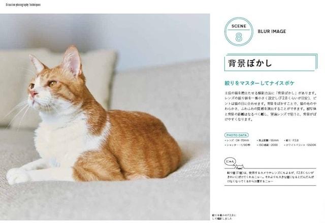 猫の撮影テクニック、背景ぼかしの解説 by ねこ撮。
