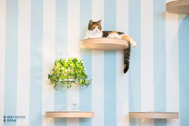 猫カフェ MoCHA(モカ)イオンレイクタウン店の猫スタッフ2