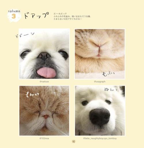 猫、犬、ウサギのドアップ写真 by #ふわもこ部