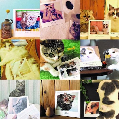 「みんなでつくる猫フォトブックギャラリー」第2弾の応募作品イメージ