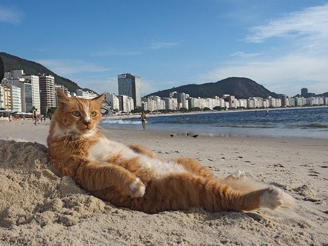 猫のシキンニョ ♂ (ブラジル/リオデジャネイロ)