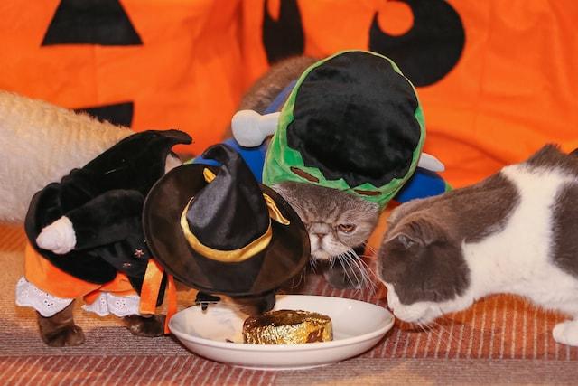 「金のねこまんま」を食べる猫カフェ猫家大宮店の猫たち