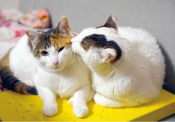 保護猫の面倒をみる「ぽー」 by 書籍「やさしいねこ」