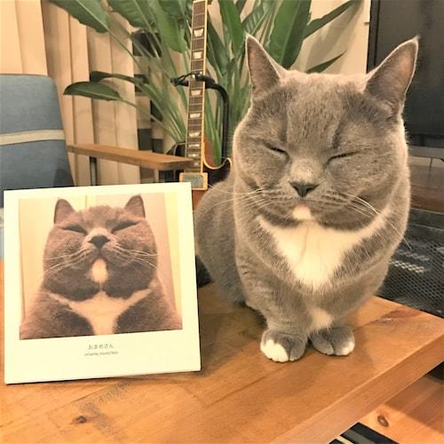 人気猫、おまめちゃん(@omame_munchkin)のフォトブック