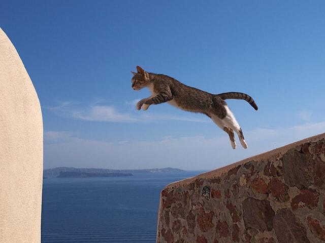 猫のジャンパー ♀ (ギリシャ/エーゲ海)