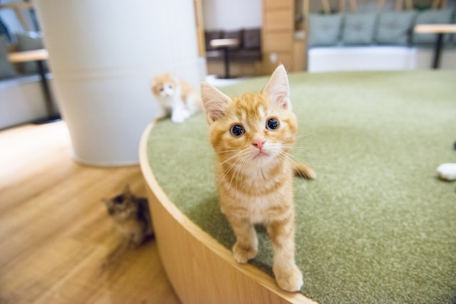 猫カフェMoCHA(モカ)の新宿店