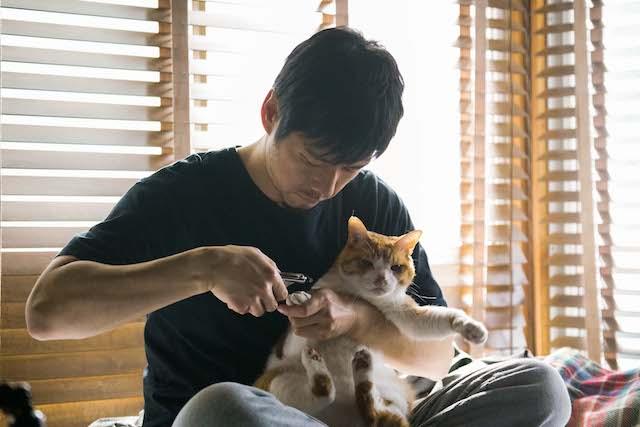 猫の爪を切る西島秀俊 by ブランケット・キャッツ