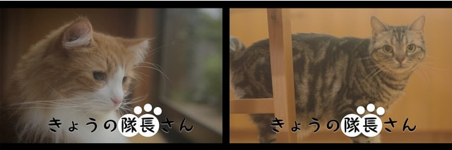 スクールガールストライカーズの猫WEB動画「きょうの隊長さん」
