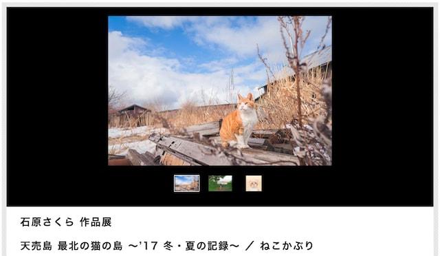 猫写真家・石原さくらさんの写真展、天売島 最北の猫の島 ~'17 冬・夏の記録~ / ねこかぶり