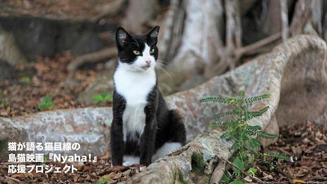 猫が語る、猫目線で撮影する島猫映画『Nyaha!(ニャハ!)』