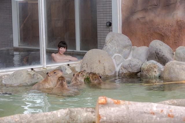 カピバラと混浴気分を味わえる世界初の温泉「カピバラの湯」