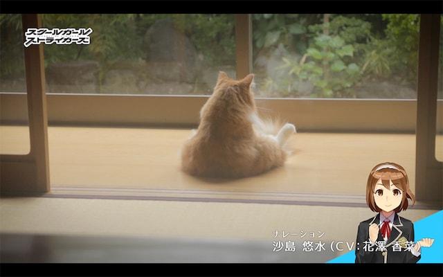 スクスト猫動画「一喜一憂する隊長さん」編のシーン1 by ナレーション:沙島 悠水(CV: 花澤 香菜)