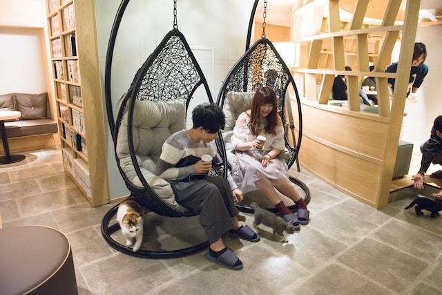 学生料金で学生にも優しい猫カフェ by MoCHA(モカ)新宿店