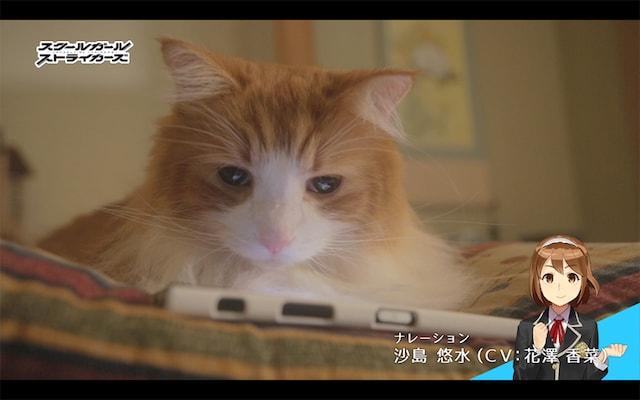 スクスト猫動画「一喜一憂する隊長さん」編のシーン3 by ナレーション:沙島 悠水(CV: 花澤 香菜)