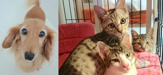 保護猫&保護犬の里親会も開催