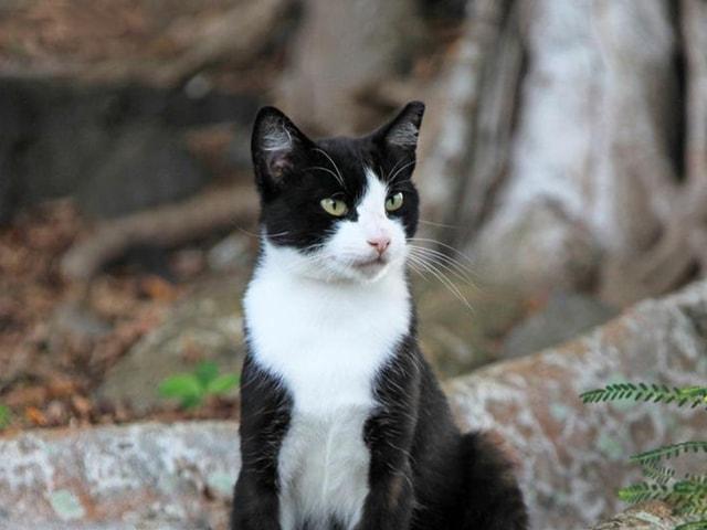 宮沢和史が楽曲制作、沖縄の島猫映画「Nyaha!(ニャハ!)」