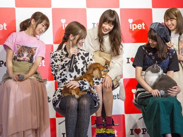 猫×乃木坂46のメンバーによるウェブCM、発表会の様子を公開