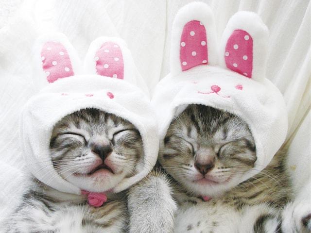 中日新聞から出版されたかわいい猫の写真集「にゃんこ みっけ」