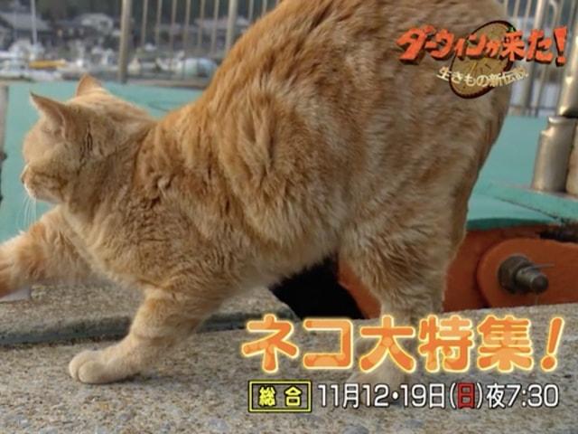 岩合さんも登場、NHKのダーウィンが来た! 2週連続でネコを大特集