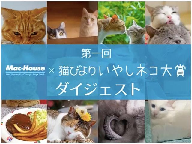 第一回「いやしネコ大賞」のダイジェスト動画