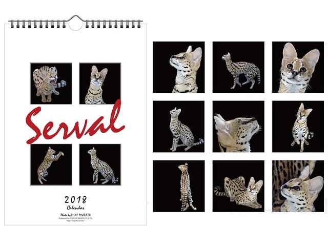 美しいネコ科動物、サーバルのスタイリッシュな2018年カレンダー