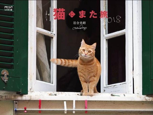 アサヒカメラ12月号は岩合さんが撮影した猫カレンダーや野生動物を収録