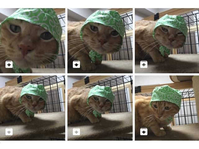 愛猫の写真を自動でグループ化!Googleフォトにペット識別機能が追加