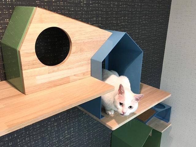 猫の製品ブランドNeconoMa(ネコノマ)、キャットシェルフ「House」を発売