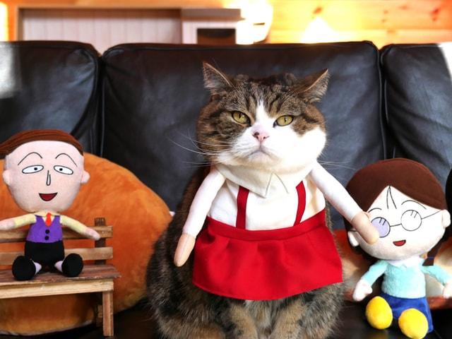 ギネス記録猫「まる」×ちびまる子ちゃんのコラボ動画が公開中