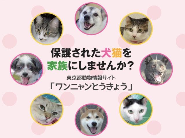 東京都が犬猫の譲渡情報サイト「ワンニャンとうきょう」を開設
