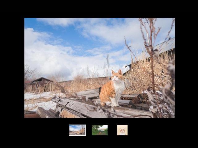 猫写真家・石原さくら氏の作品展が銀座のギャラリーで開催