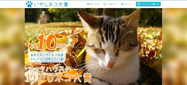 猫のフォトコンテスト「いやしネコ大賞」