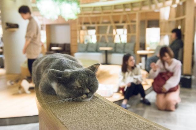 猫カフェMoCHA(モカ)新宿店で気持ちよさそうに眠る猫