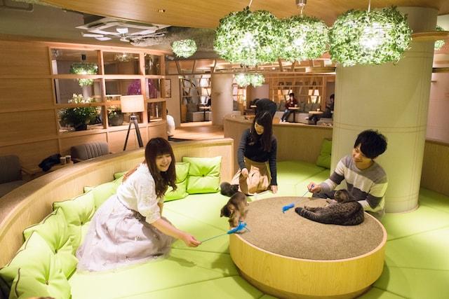 猫カフェMoCHA(モカ)新宿店で猫たちとふれあう来店客