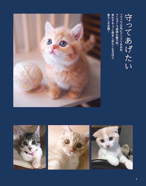 守ってあげたいをテーマにした猫の写真1 by 写真集「にゃんこ みっけ」