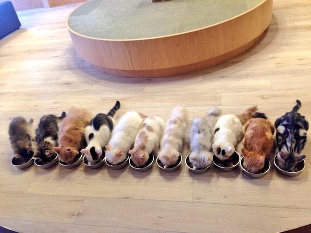 猫カフェMoCHA(モカ)新宿店の猫が大集合するご飯タイム