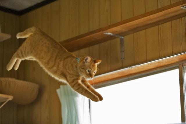上下運動をする猫のイメージ写真(AC)