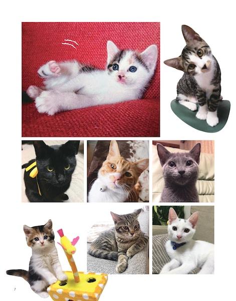 守ってあげたいをテーマにした猫の写真2 by 写真集「にゃんこ みっけ」