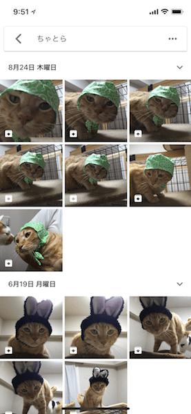 Googleフォトで猫(ペット)の写真を検索することができる