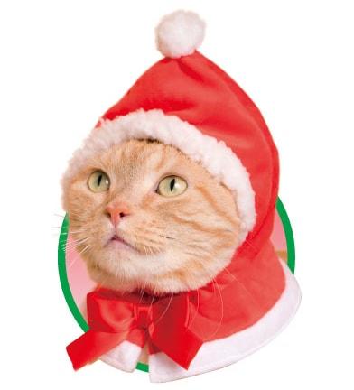 猫用のかぶりもの、サンタクロース