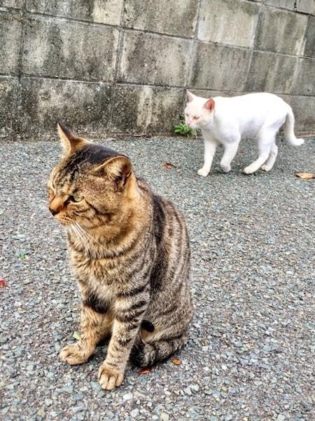 相島の猫たちのイメージ写真(AC)