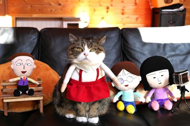 「まる子」のコスチュームを身に着けてた人気ネコの「まる」